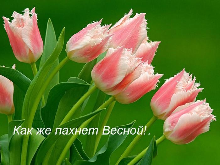 Картинки фото с весной