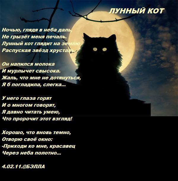 стихи про котика любимого дома отели рядом