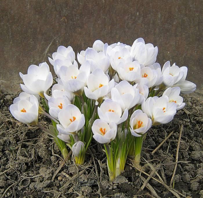 http://www.stihi.ru/pics/2011/02/23/3307.jpg