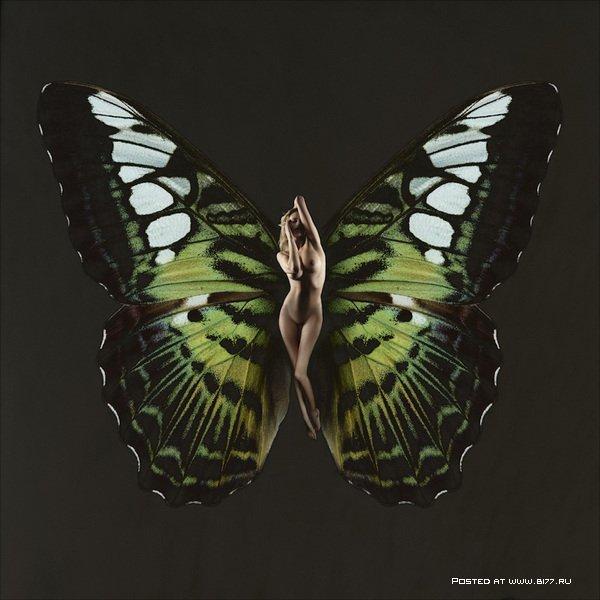 порно фото красивых бабочек