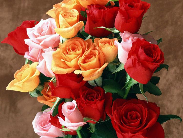 С красивые цветы