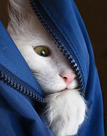 http://www.stihi.ru/pics/2011/03/12/7144.jpg