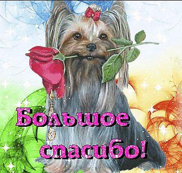 Спасибо за внимание цветок