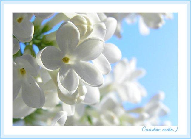 http://www.stihi.ru/pics/2011/03/27/4365.jpg