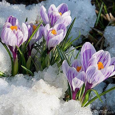 http://www.stihi.ru/pics/2011/03/30/621.jpg