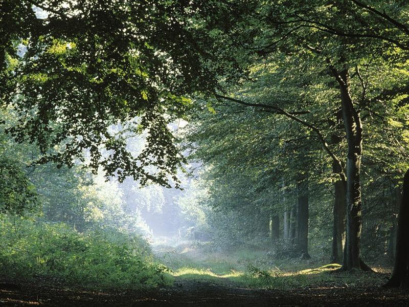 Мелодии леса скачать бесплатно