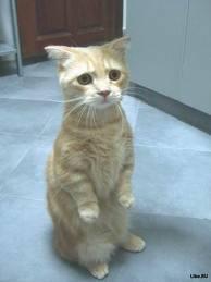 фото кот голодный