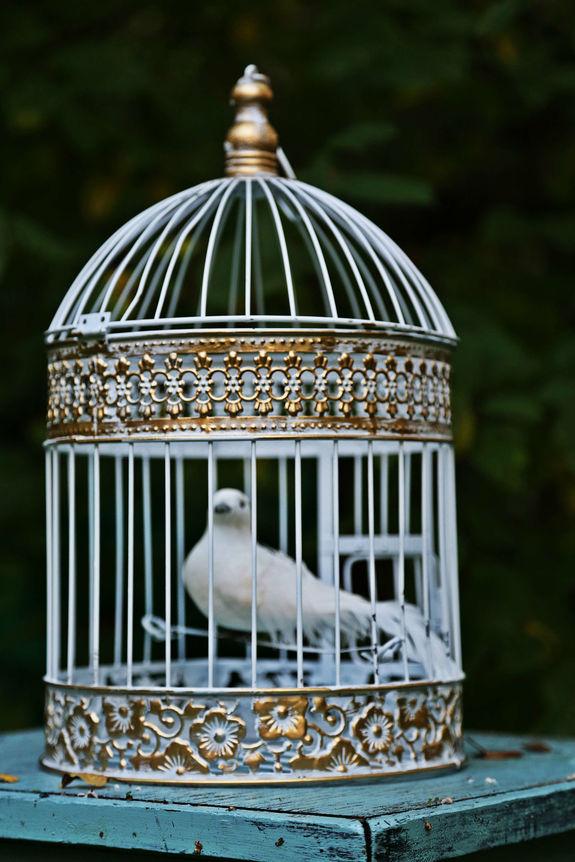Западки для ловли птиц своими руками фото 639
