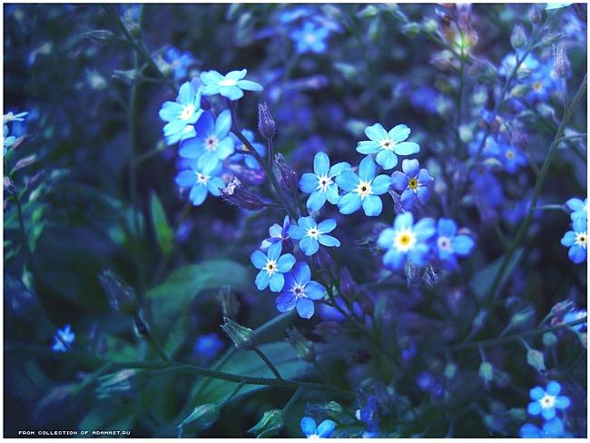 http://www.stihi.ru/pics/2011/04/29/8064.jpg