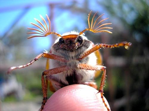 картинки жуки: