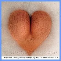 фото жопы как сердце