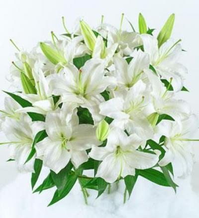 цветы лилии картинки: