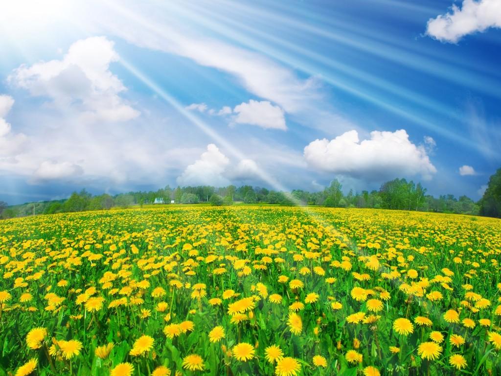 картинка яркого солнце сибири