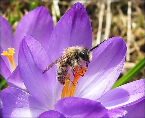 Цитаты о весне и цветении