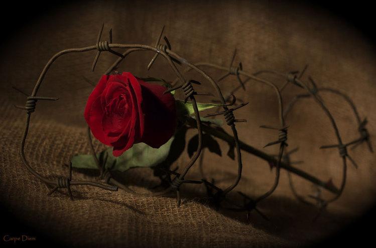 Рисованная роза с шипами