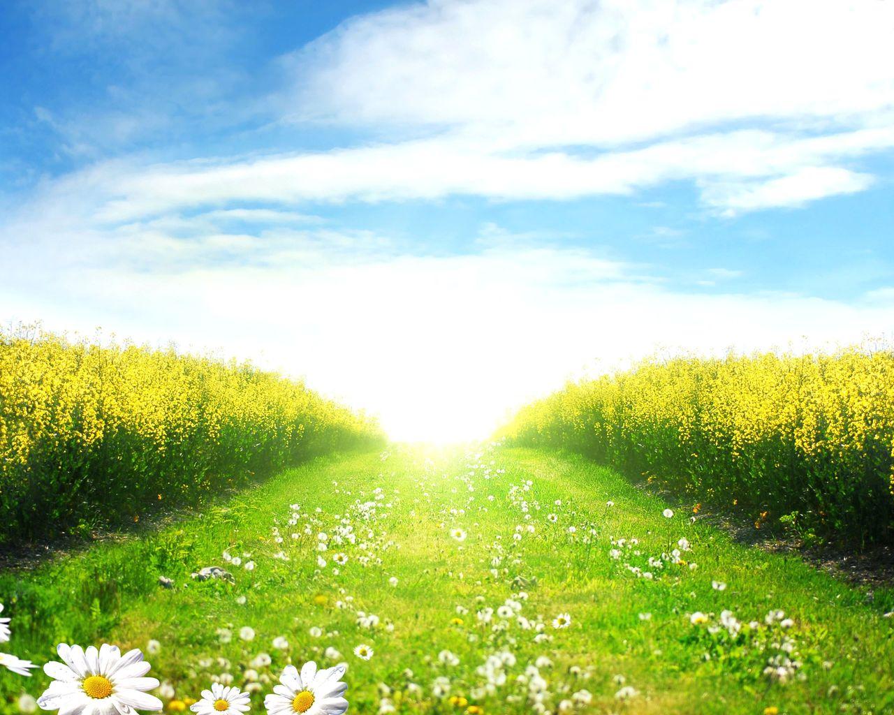 Казахстанских, картинка летняя полянка