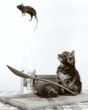 Кошка и мышка - Льюис Кэрролл (Мисс Хайд) / Стихи.ру