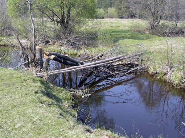 Как сделать мостик на воде