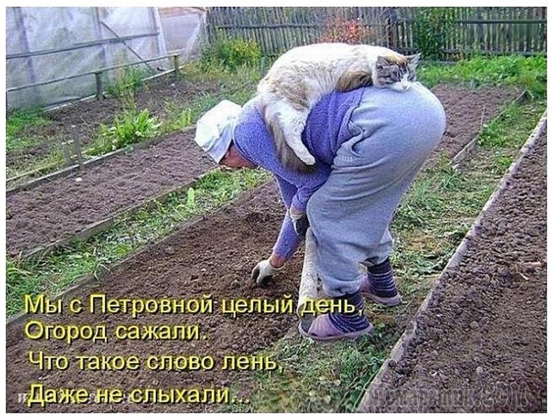 http://www.stihi.ru/pics/2011/07/23/4001.jpg