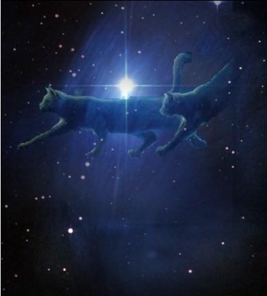 Кошка созвездие
