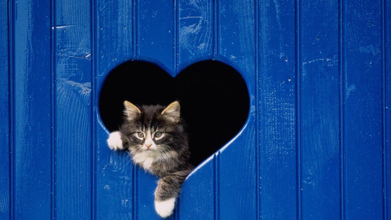 Чем больше я люблю котов (Богдан Филатов 77) / Стихи.ру Больше Чем Люблю