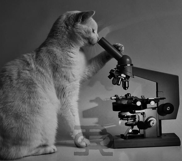Картинки по запросу мир под микроскопом