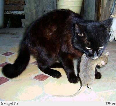 будет ли кот ловить мышей если его кастрировать