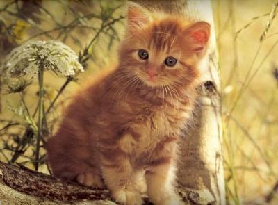 Кошка осень
