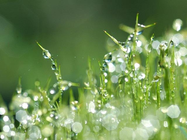 фото росы на траве