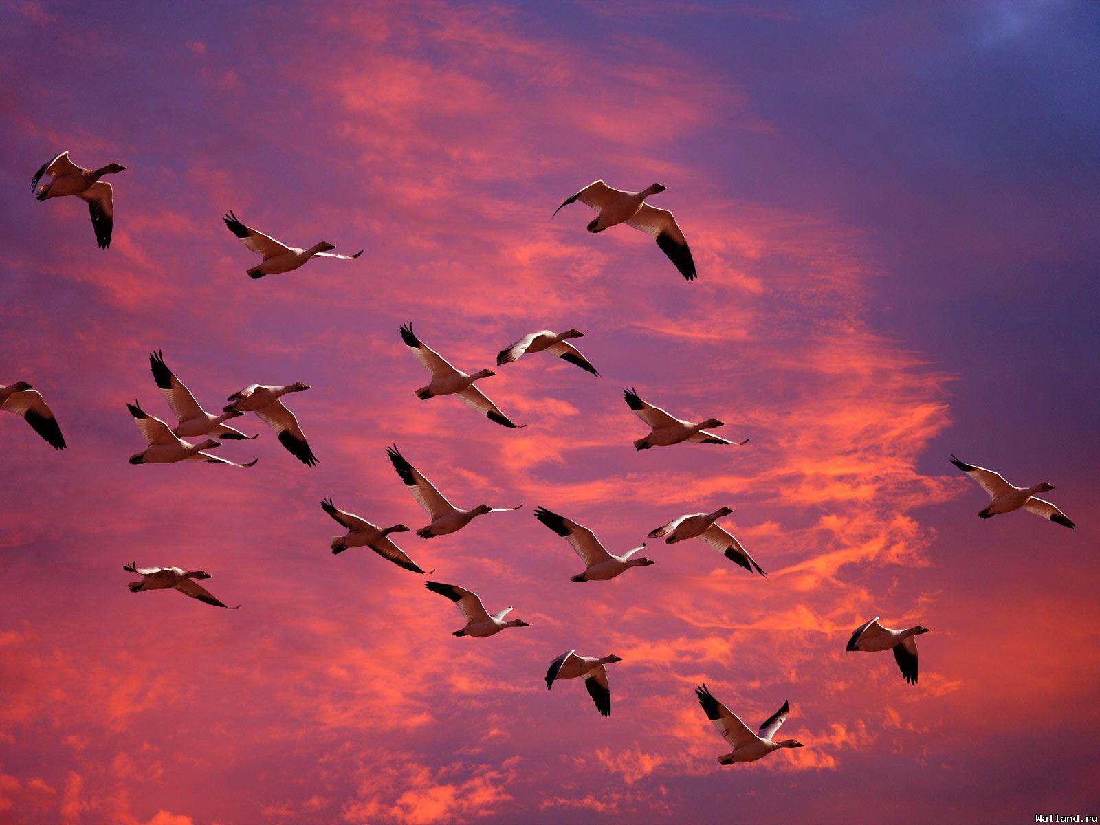 фото стаи птиц