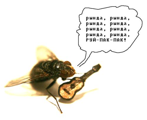 Страховщика днем, прикол про муху картинка