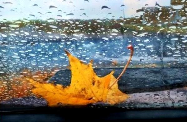 за окном осень дождь картинки