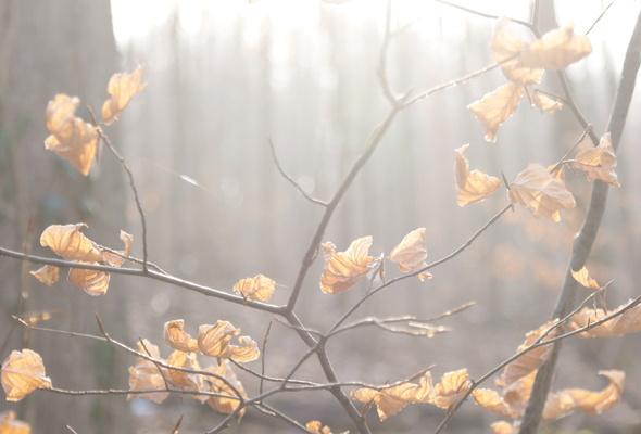 http://www.stihi.ru/pics/2011/11/01/9667.jpg