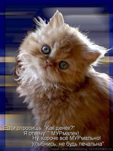 Прикольные картинки с кошками Тут много разных приколов с