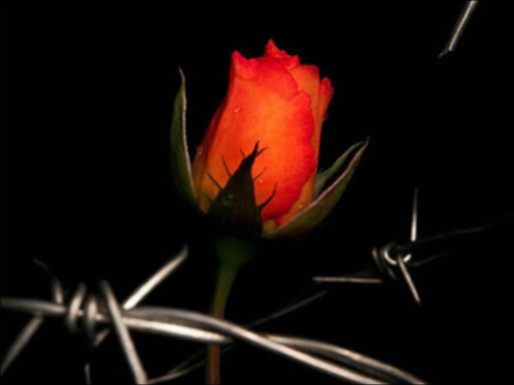Любовь надежда и вера вероника