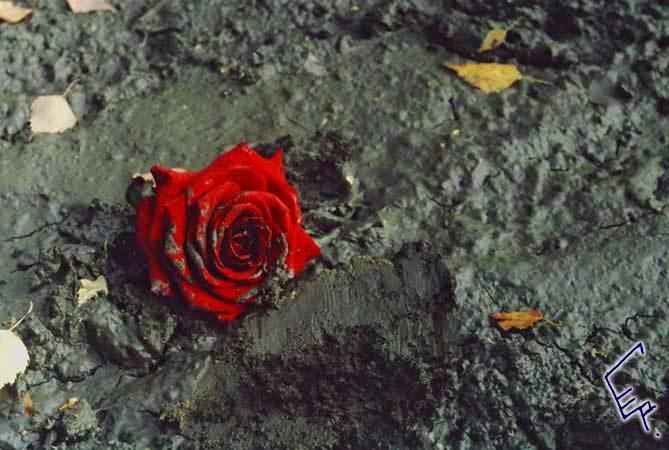правоприменительных статусы про прибли жающуюся смерть девушка мечтает