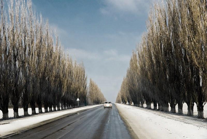 Какие деревья сажают у дороги