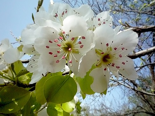 http://www.stihi.ru/pics/2011/12/12/7697.jpg