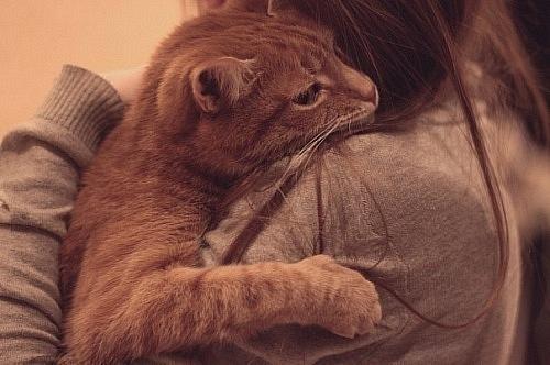 http://stihi.ru/pics/2012/01/11/7227.jpg