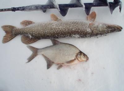клев рыбы на зюраткуле