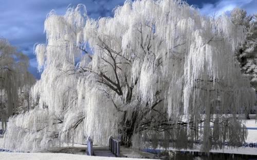 Ледяное Царство Скачать Торрент - фото 6