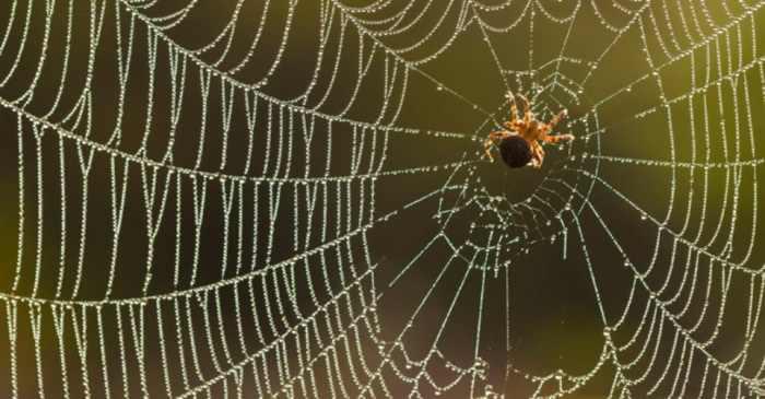 Картинки по запросу паутинка
