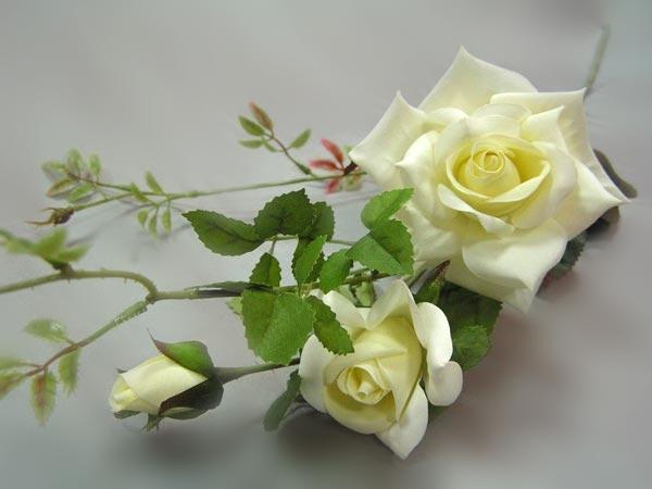 Бiлi троянди