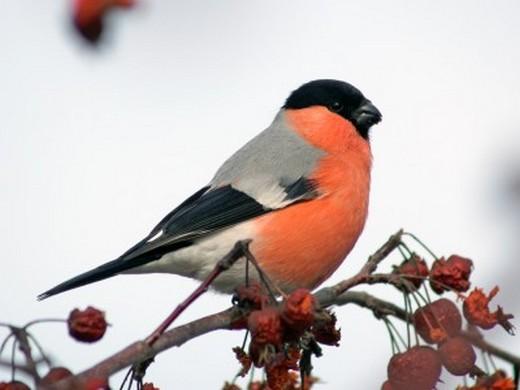 Эта птица не часто встречается на