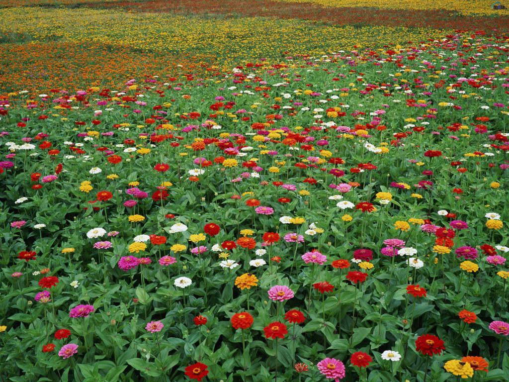 Стихи не рвите цветы не рвите