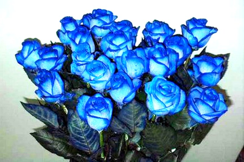 Фото синих роз букет
