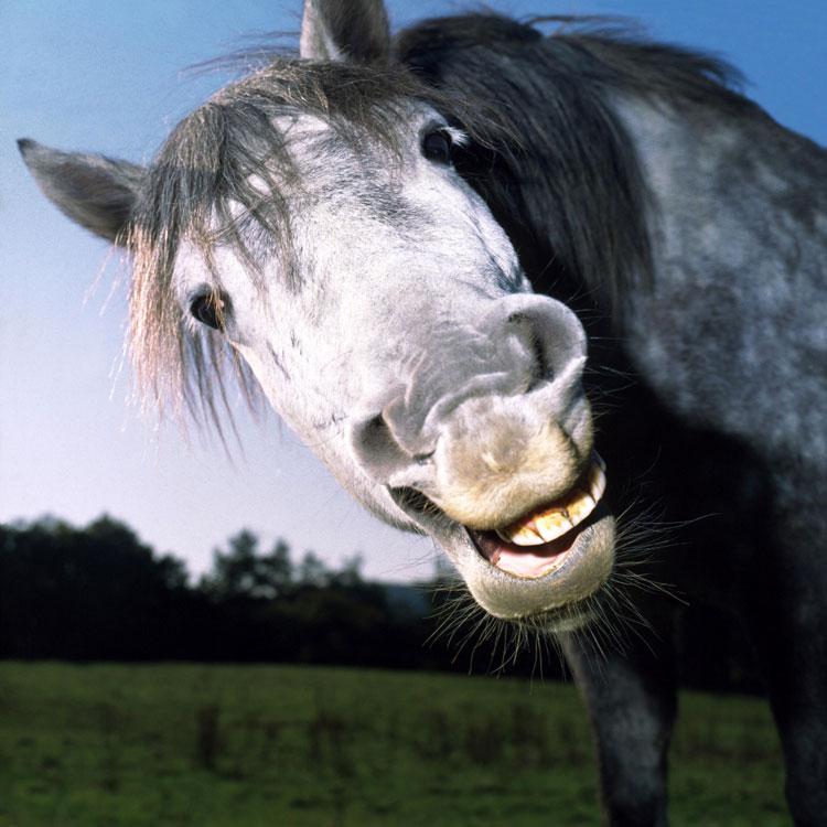 Днем, прикольная картинка лошадь