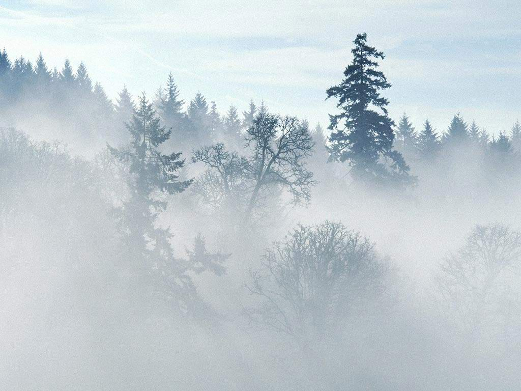 Фото осенние туманы 2