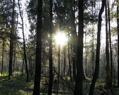 Поздняя осень в лесу (Владеющий Ми) / Стихи.ру