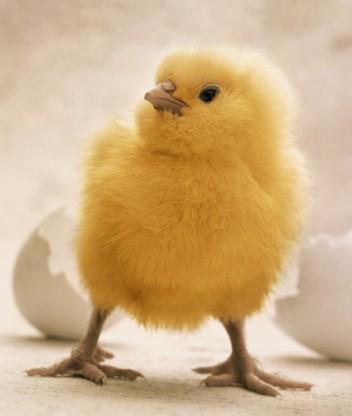 скачать цыпленок пи через торрент - фото 11